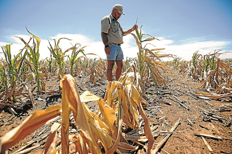 http://cdn.womeninwinedemo.aewebmastersdev.co.za/news_images/Farms during the drought.jpg